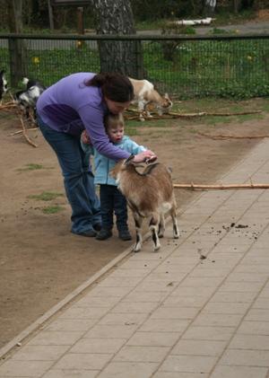 Kinderzoo, Ziegen füttern