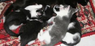 Katzenbabys bei ihrer Mutter