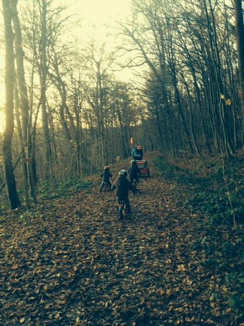 Im Herbst im Wald